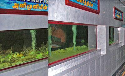 Chennai Marine Aquarium