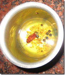 Cockroach-in-an-Oil-Bowl