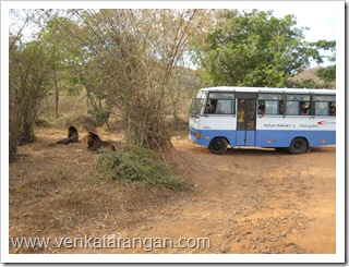 Lion Safari in Vandalur zoo (வண்டலூர் விலங்கியல் பூங்கா - சிங்கம் சுற்றுலா)
