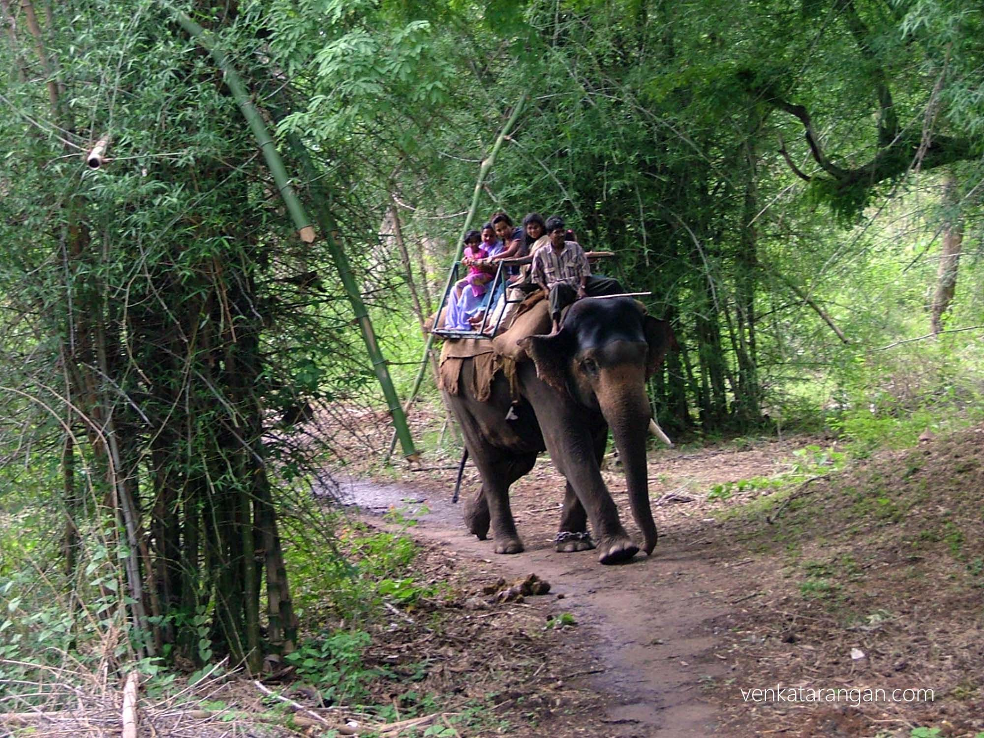 Elephant ride in a nature park nearby