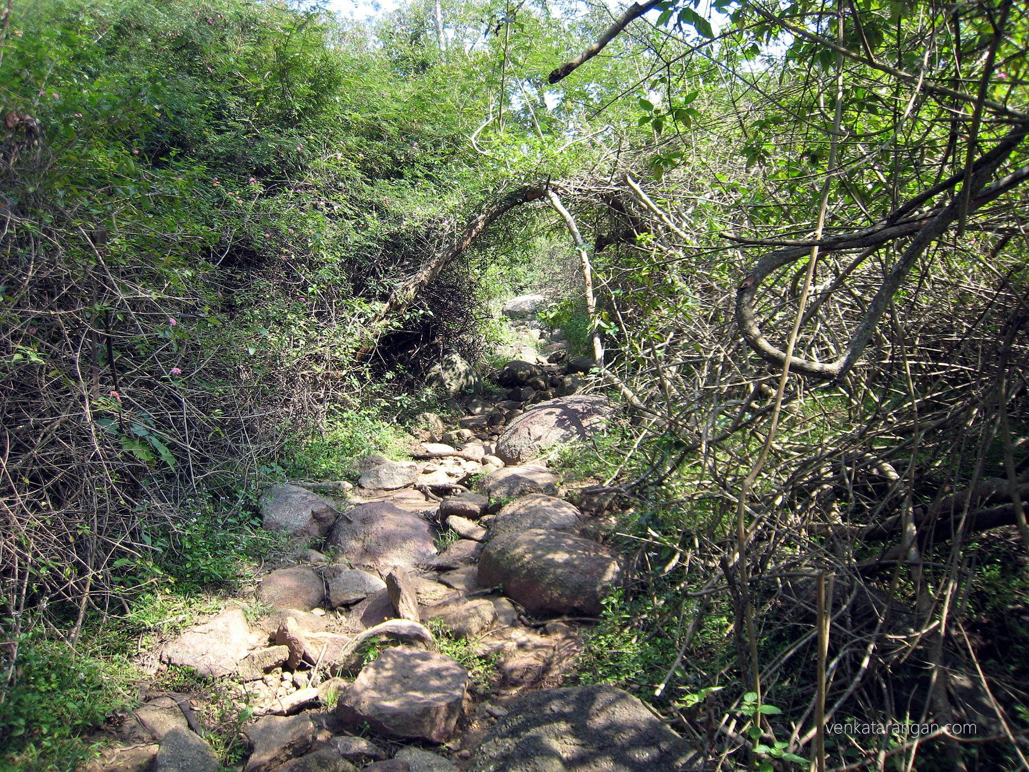 Trek path in Yelagiri