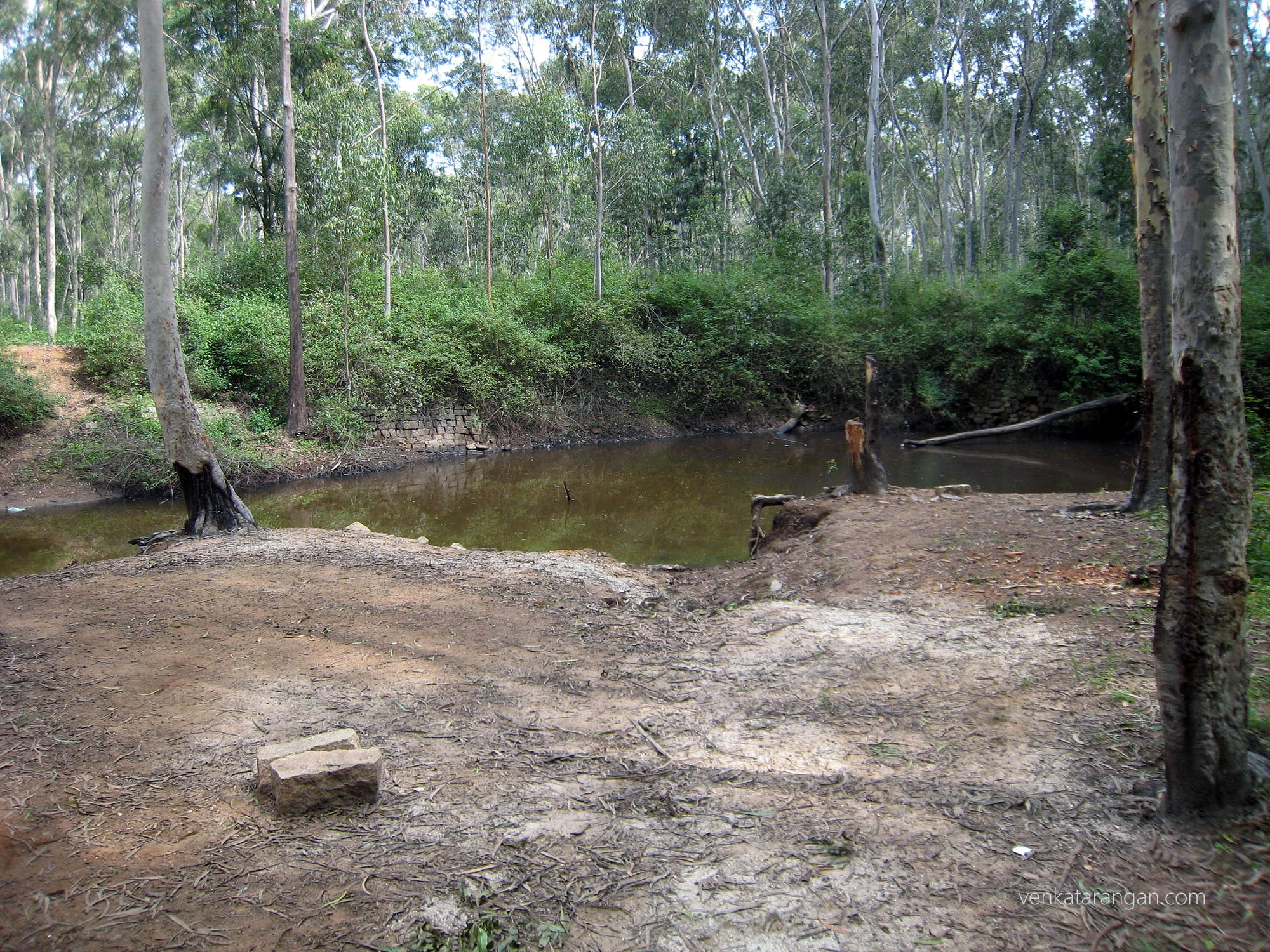 Natural pond in the trek path in yelagiri