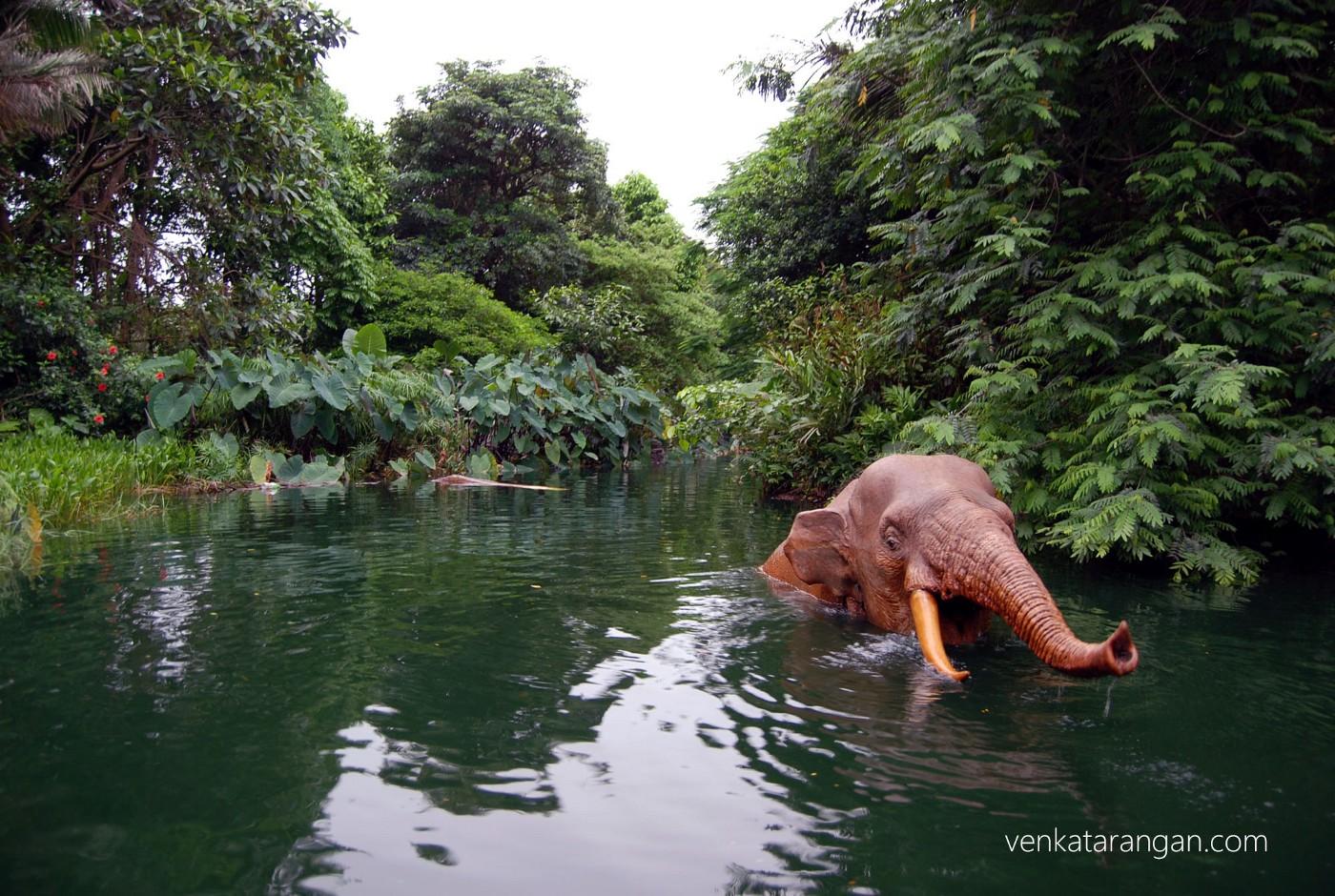 Jungle ride - Elephant replicas were life like
