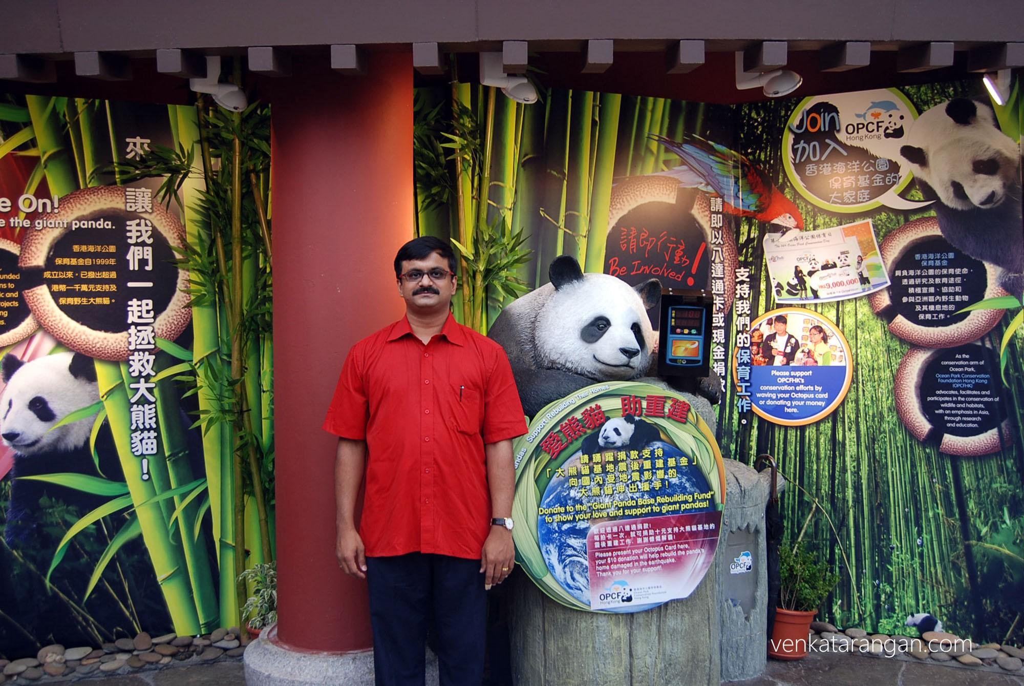 Giant Panda gallery