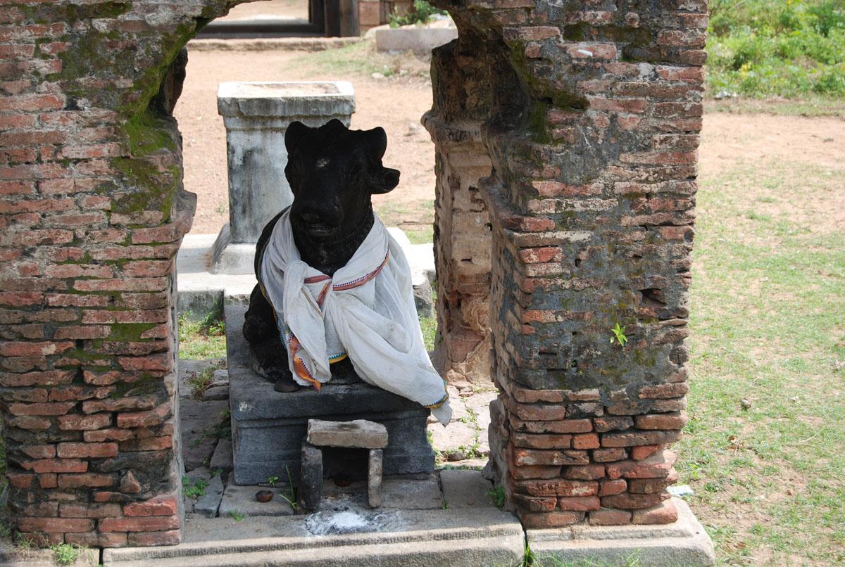 Nandhi bhagawan at Kankodutha vanidham