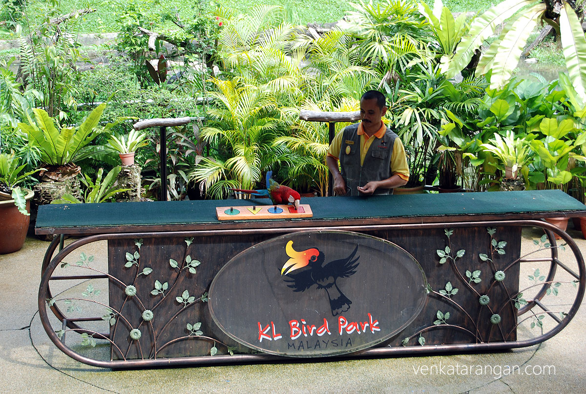 Parrot performing tricks - KL Bird Park