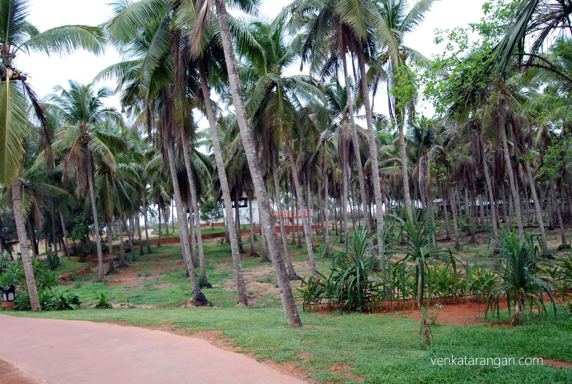Coconut trees line the property