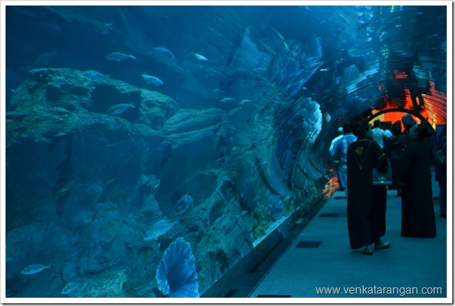 Aquarium inside Dubai Mall