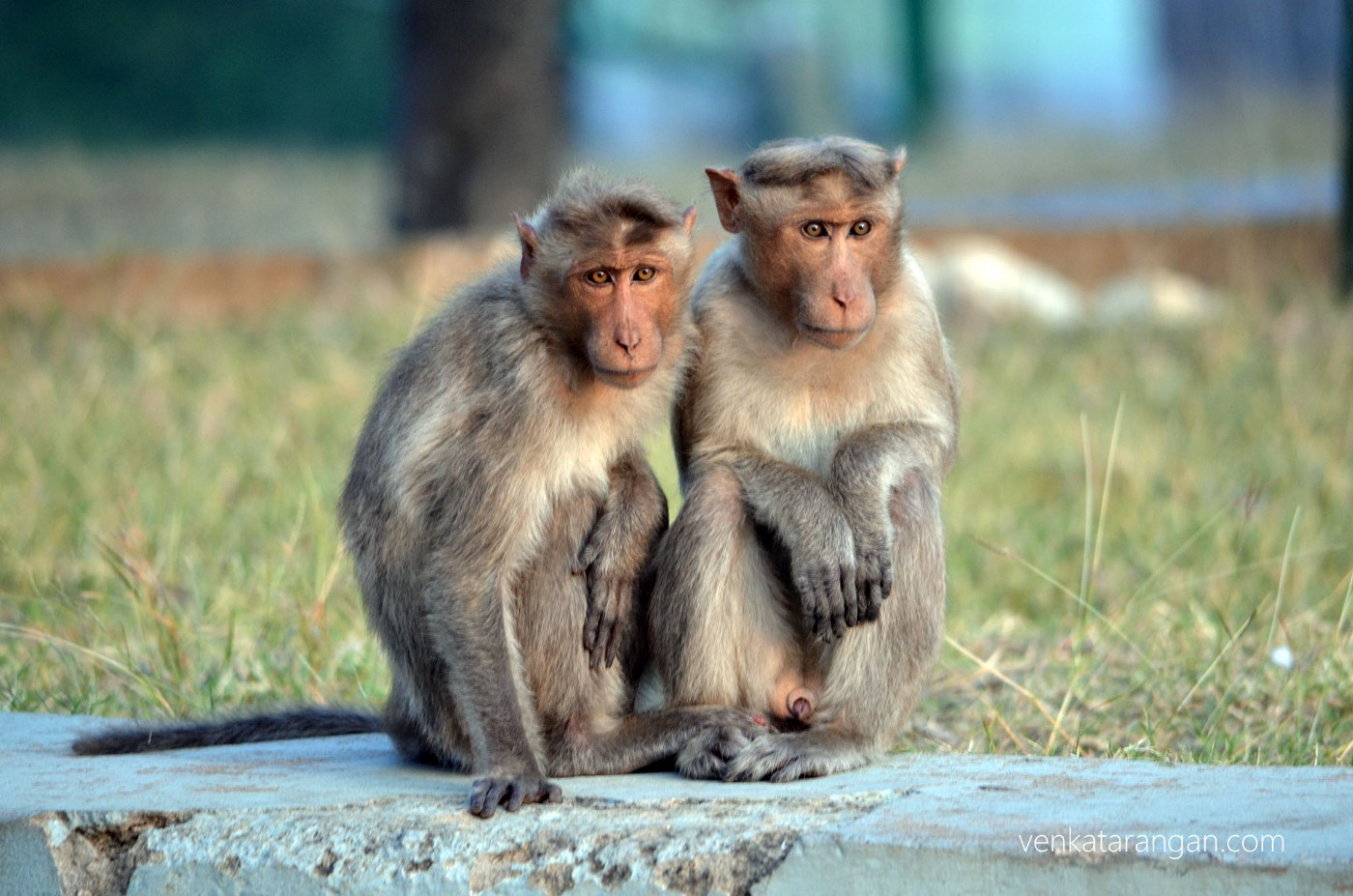 Monkeys, wondering what we humans are queueing for, in front of the tourist centre