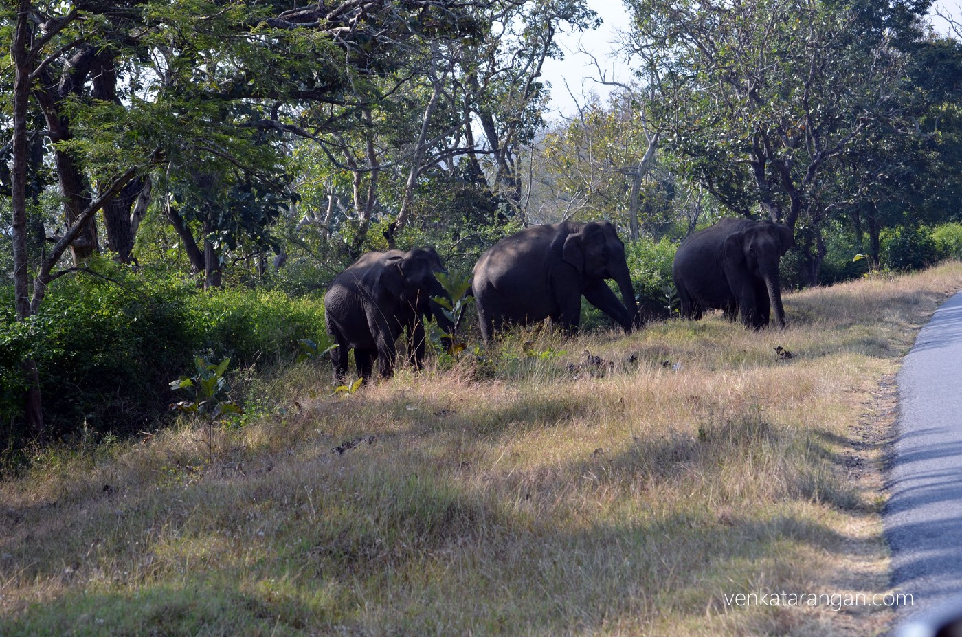 When driving in the forest, our host parked at safe distance whenever she saw a herd of elephants - our of respect for their habitat and safety