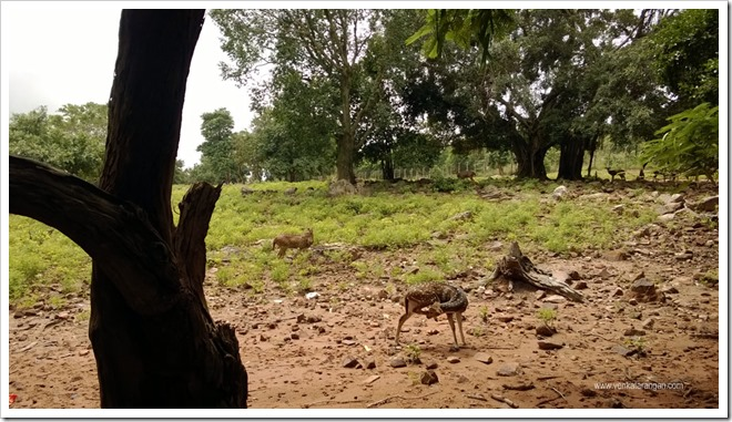 A deer park along the route down hill from Tirumala, a favourite with travellers