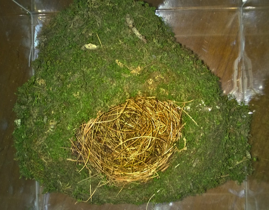 Bird-Nest-Shimla