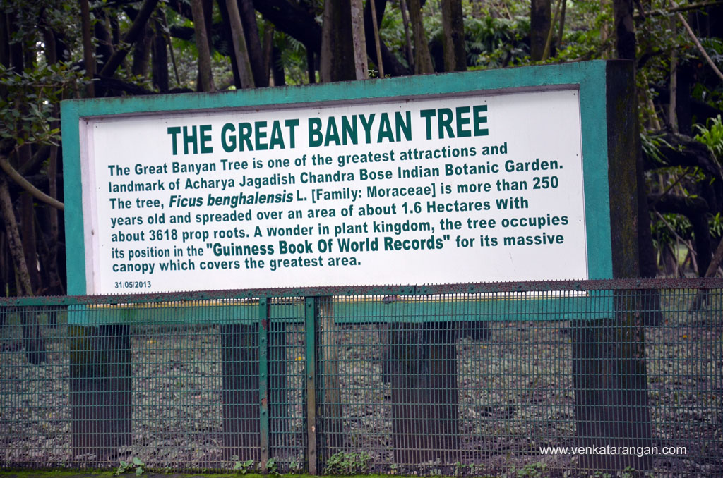 The Great Banyan Tree, Botanical Gardens Kolkata