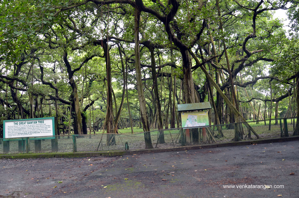 Roots of the Great Banyan Tree