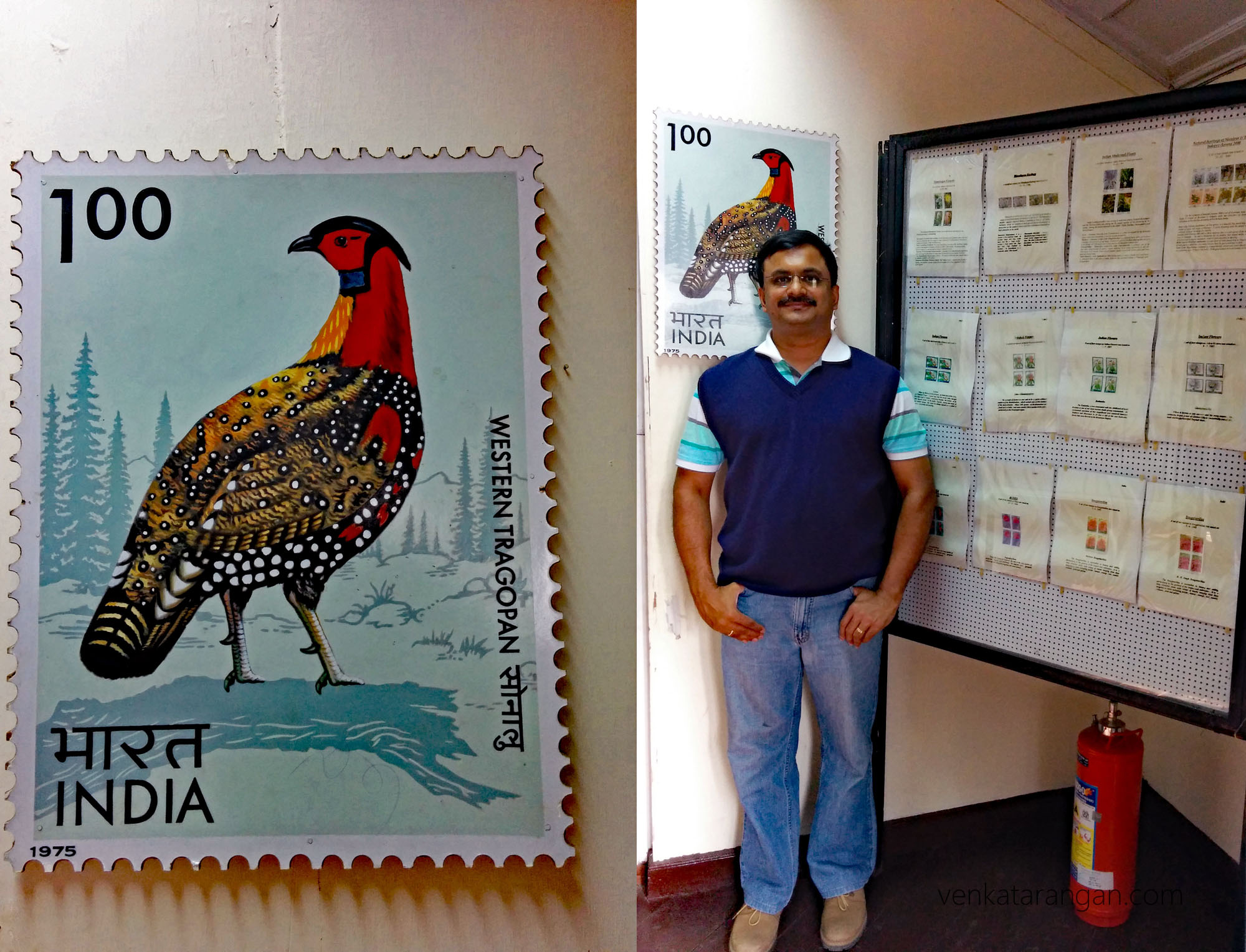 Postal Stamp marking the western tragopan, a brightly coloured bird getting the status of state bird of Himachal in 2007