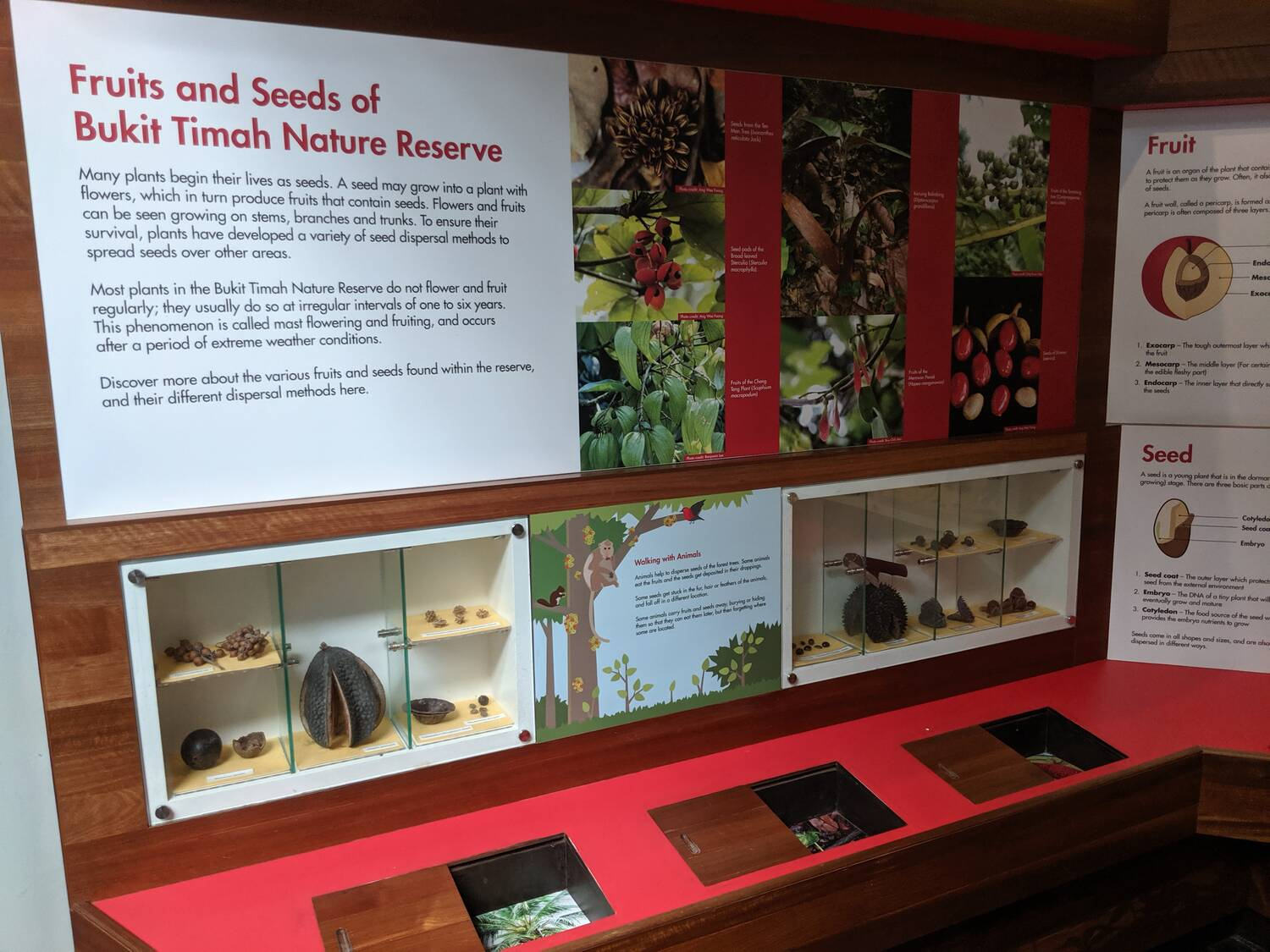 Fruits and Seeds of Bukit Timah Nature Reserve