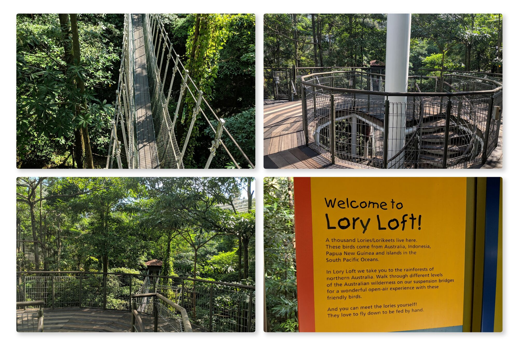Lory loft is a recreation of the rainforest of Northern Australia. I loved the suspension bridge and tranquilness here.