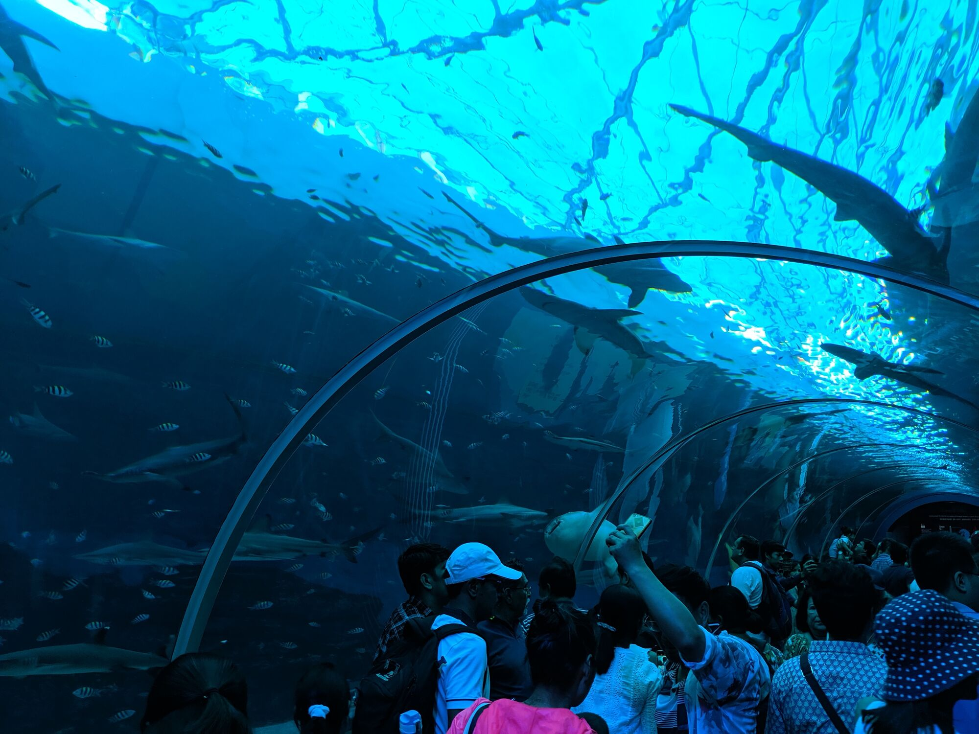 The underwater tunnel where you can walkthrough
