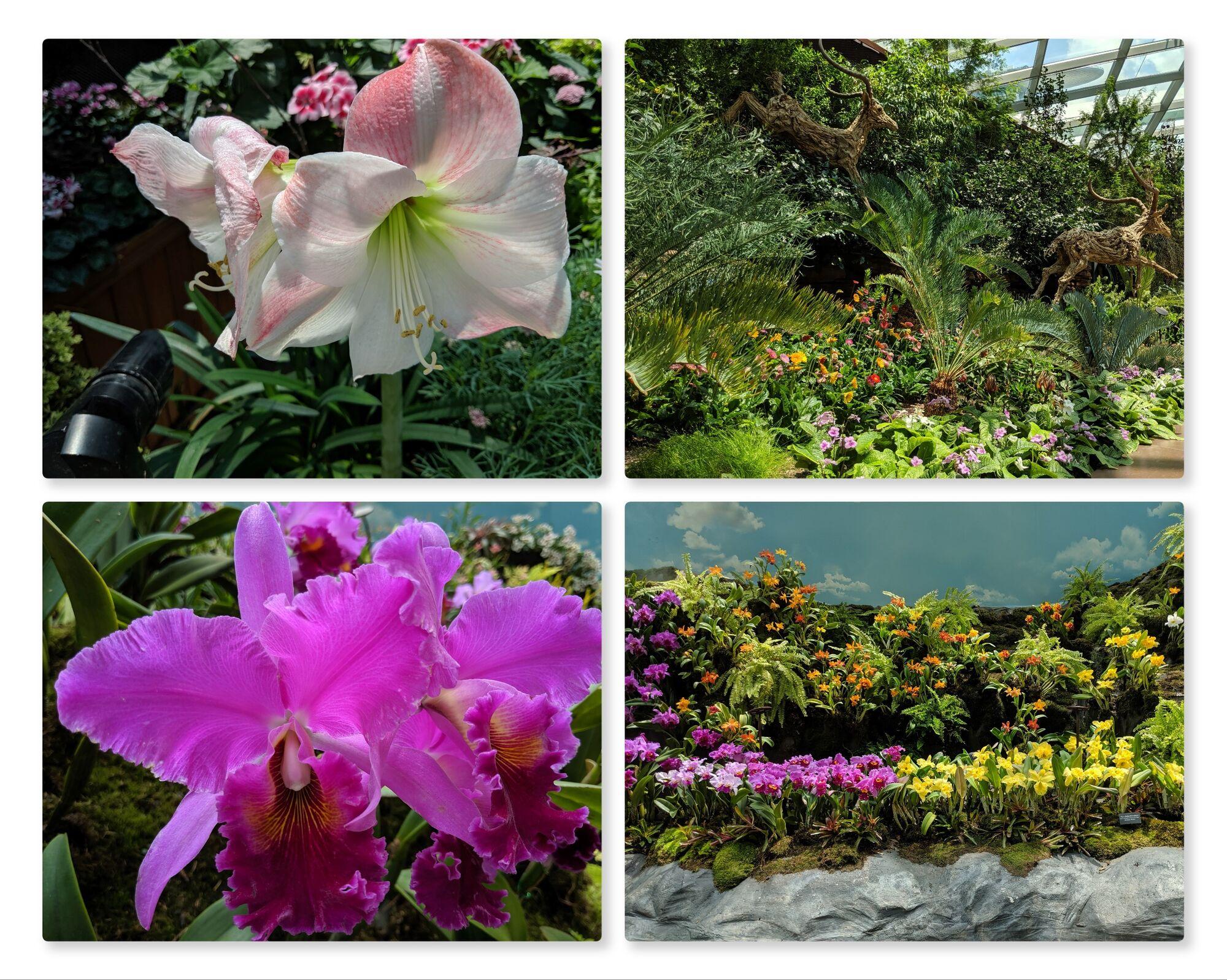 Various plant varieties on display