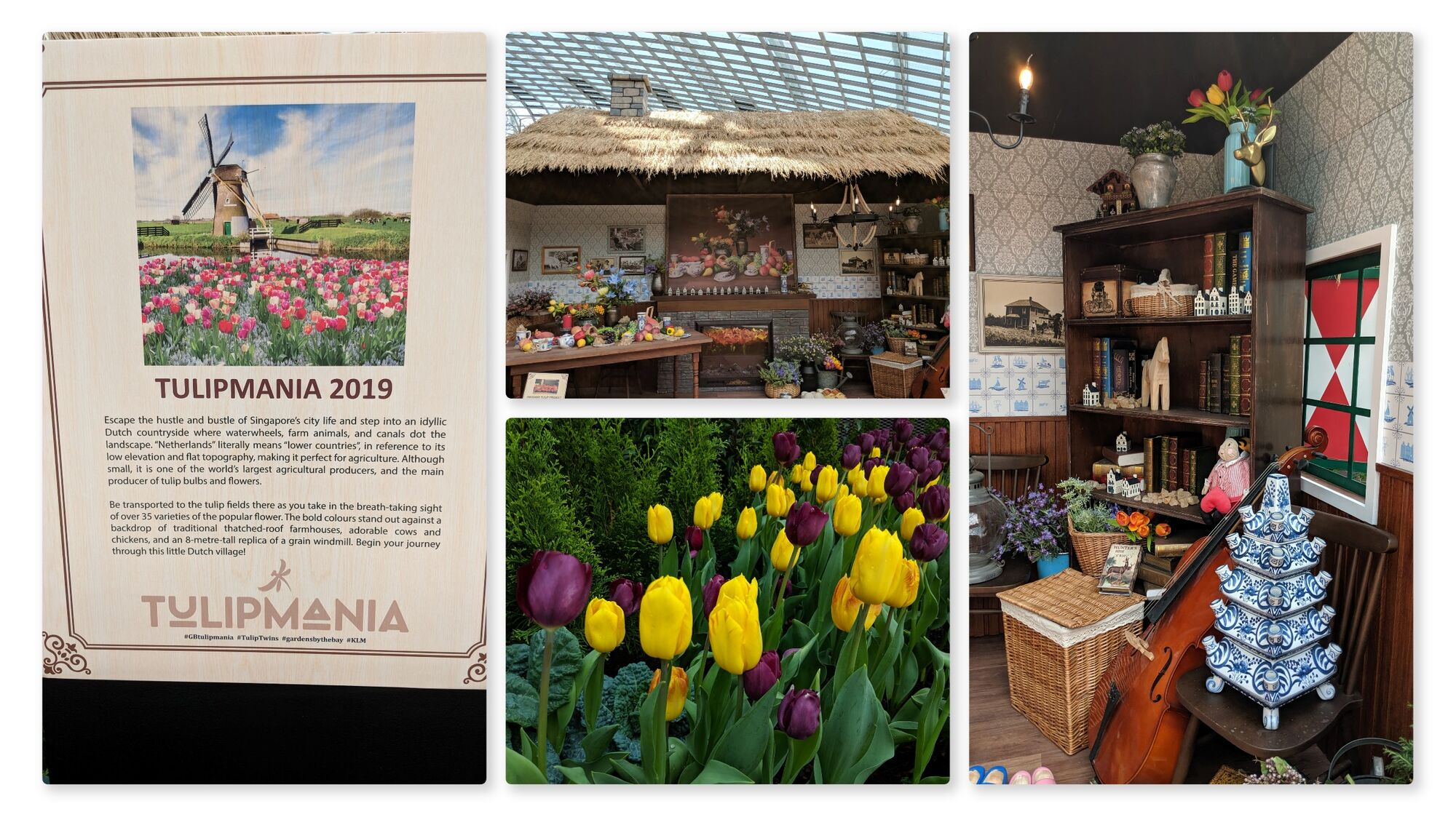 Tulipmania 2019 - Step into an idyllic Dutch Countryside where you can see tulip bulbs, farm house and more.