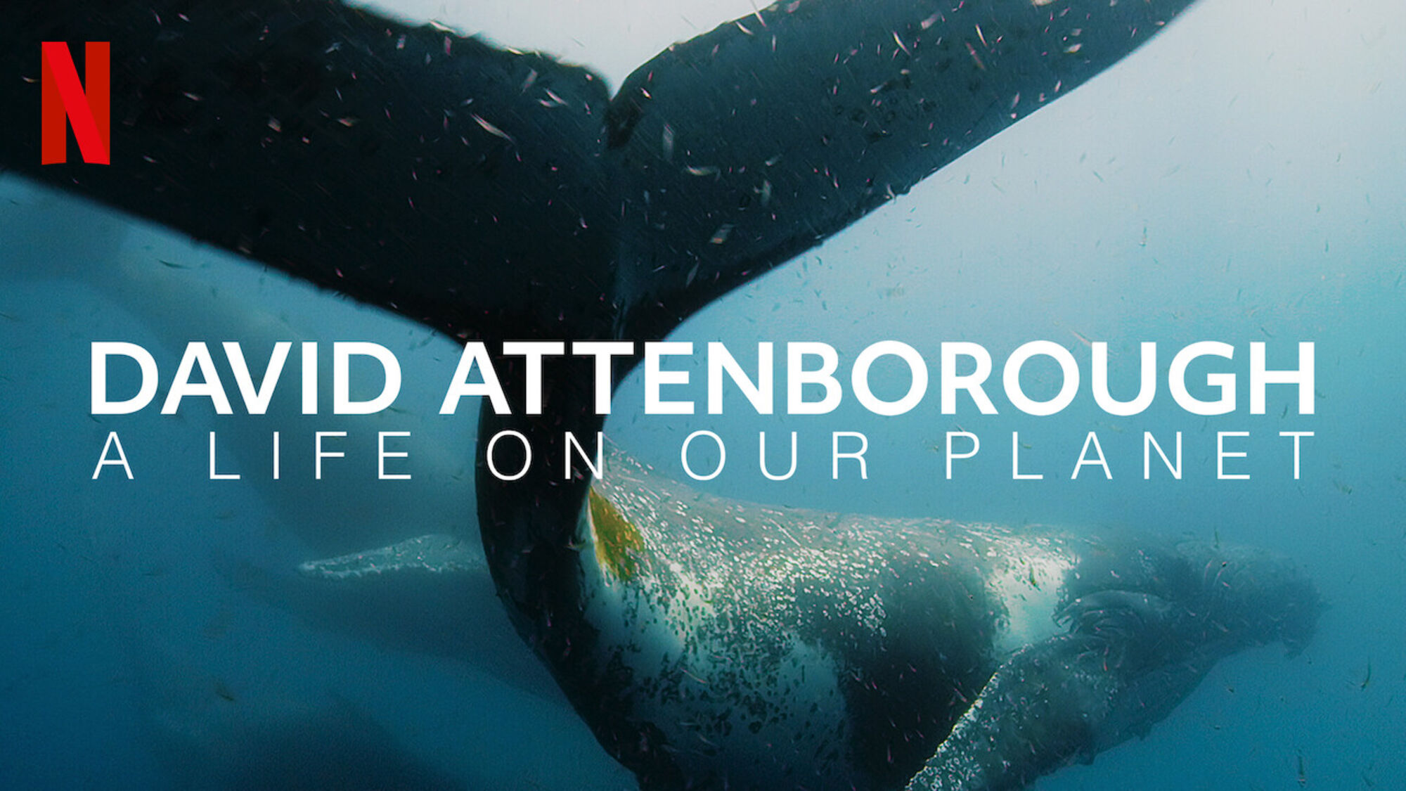 David Attenborough: A Life on Our Planet (2020) | Writing for sharing