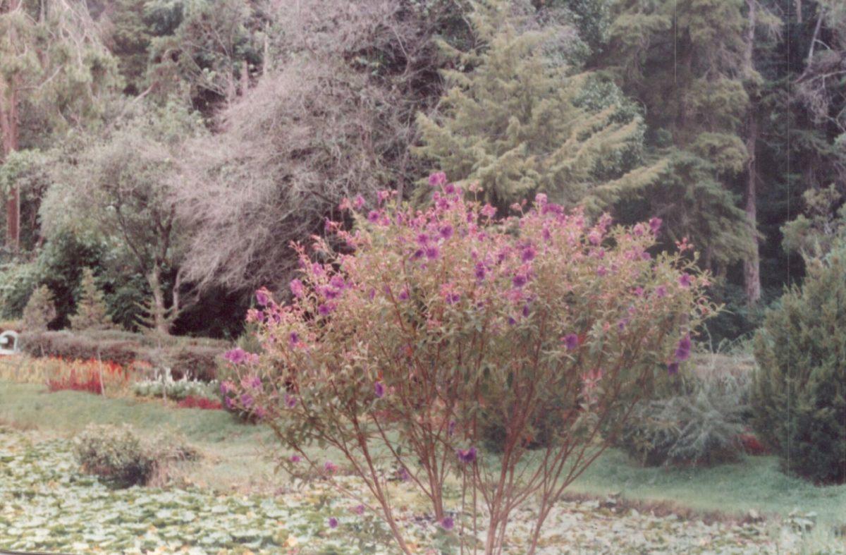 Beautiful flowers in Sim's Park, Coonoor in 1995